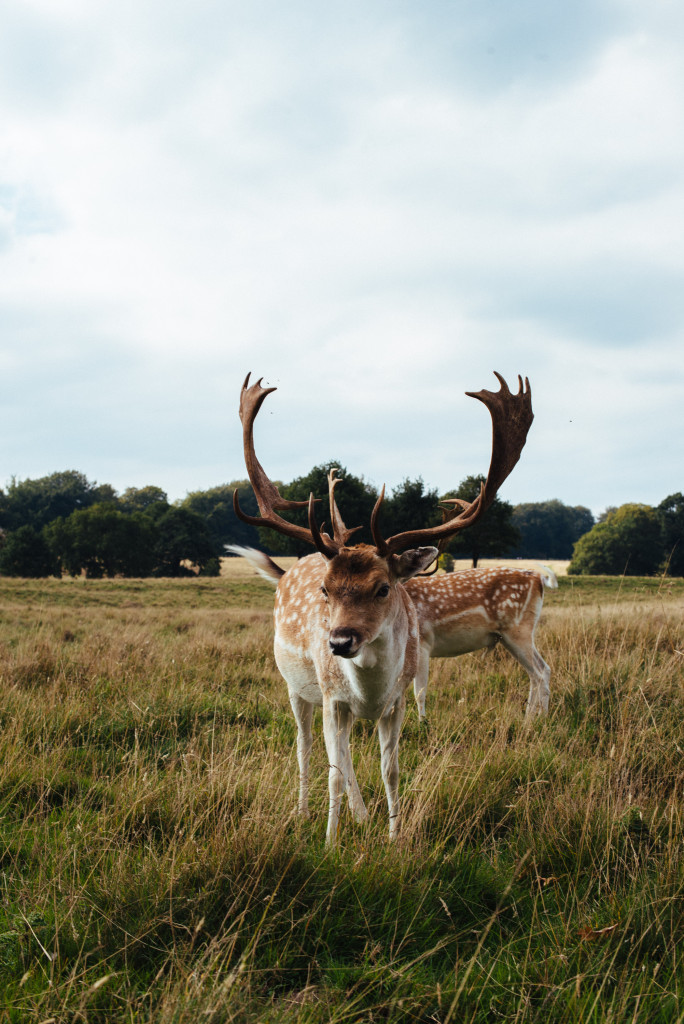 deer-tatton-park